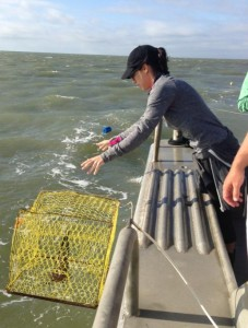 Jessica dropping a trap in the Chesapeake Bay as a part of her Fall 2013 Field Class Experience on the Bay.